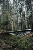 Ландшафт гор: лес весны Стоковое Фото
