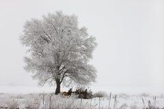 Ландшафт дерева наслоенный в заморозок. Стоковое фото RF