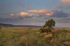 Ландшафт дерева на холме с утесами и облаками на заходе солнца Стоковые Изображения RF