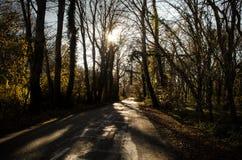 Ландшафт дороги асфальта идя в перевалы через деревья, деревни и места леса или населенные пункты сельского типа Aze Стоковое Изображение RF