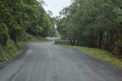 Ландшафт дороги с высокими деревьями, небом и дорогой в uttarakhand Индии Стоковое Фото