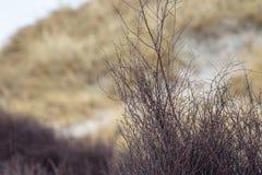 Ландшафт дюны на острове Helgoland стоковое изображение rf