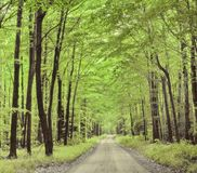 ландшафт естественный Дорога в лесе лета стоковое изображение rf