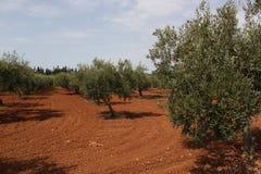 ландшафт естественный стоковая фотография rf
