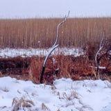 Ландшафт заболоченного места зимы стоковая фотография