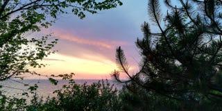 Ландшафт захода солнца моря в голубых и розовых тонах на фоне куста и деревьев стоковые изображения rf