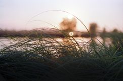 Ландшафт захода солнца с травой стоковые фото