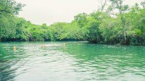 Ландшафт зеленых воды и леса вокруг реки Formoso в Boni Стоковое фото RF