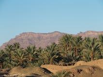 Ландшафт зеленых пальм в оазисе в центральном Марокко в старой деревне Oulad около города Zagora Стоковые Изображения
