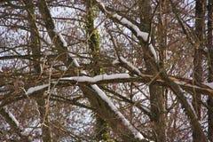 Ландшафт зимний - снег, ветви и солнце Стоковые Фотографии RF