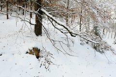 Ландшафт зимы богемской Швейцарии стоковое фото rf