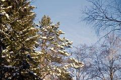 Ландшафт зимы ветвей дерева против неба Стоковая Фотография RF