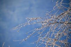 Ландшафт зимы ветвей дерева против неба Стоковые Изображения