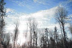 Ландшафт зимы ветвей дерева против неба Стоковое Изображение RF