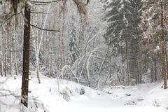 Ландшафт зимы в лесе снега Стоковая Фотография RF