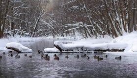 Ландшафт зимы в предместье Казани стоковые фотографии rf