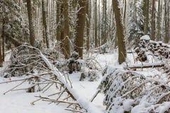 Ландшафт зимы главным образом лиственного леса в свете захода солнца стоковое изображение