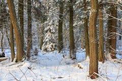 Ландшафт зимы главным образом лиственного леса в свете захода солнца стоковые изображения rf