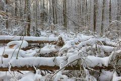 Ландшафт зимы главным образом лиственного леса в свете захода солнца стоковое изображение rf