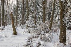 Ландшафт зимы главным образом лиственного леса в свете захода солнца стоковые изображения