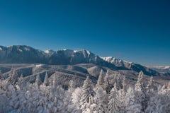 Ландшафт зимы гор carpathians Небо елей Snowy, голубых и ясных после восхода солнца Румыния, Poiana Brasov Стоковые Фотографии RF