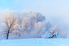 Ландшафт зимы деревьев и реки в туманном утре стоковые фотографии rf