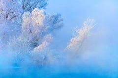 Ландшафт зимы деревьев и реки в туманном утре стоковые изображения rf