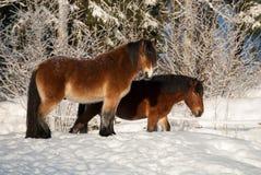 Ландшафт зимы на западном побережье в Швеции Стоковые Изображения RF