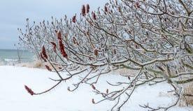 Ландшафт зимы - озеро и дерево стоковые фотографии rf