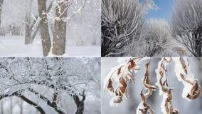 Ландшафт зимы - покрытый снег лес в солнечной погоде видеоматериал