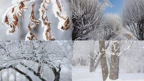 Ландшафт зимы - покрытый снег лес в солнечной погоде акции видеоматериалы