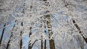 Ландшафт зимы - покрытый снег лес в солнечной погоде сток-видео