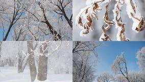Ландшафт зимы - покрытый снег лес в солнечной погоде иллюстрация вектора