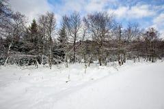 Ландшафт зимы покрытый с снегом стоковое изображение rf