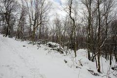 Ландшафт зимы покрытый с снегом стоковые изображения