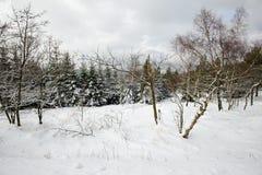 Ландшафт зимы покрытый с снегом стоковые фото