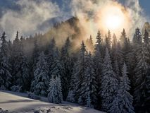 Ландшафт зимы при деревья и горы покрытые с снегом Стоковые Фотографии RF