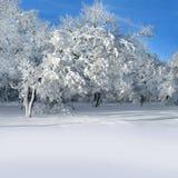 Ландшафт зимы, снежный лес Стоковое фото RF