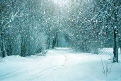 Ландшафт зимы, снежный лес Стоковые Изображения