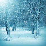 Ландшафт зимы, снежный лес Стоковое Изображение RF