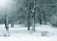 Ландшафт зимы, снежный лес Стоковые Фотографии RF