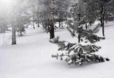 Ландшафт зимы, снежный лес Стоковая Фотография RF