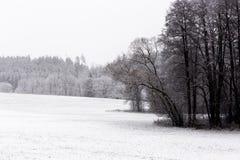 Ландшафт зимы с белым снегом покрыл поля, деревья и изгородь стоковые изображения
