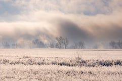 Ландшафт зимы с впечатляющим густым туманом над обнаженными деревьями за полем покрытым с замороженной сухой травой во время восх стоковая фотография rf