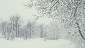 Ландшафт зимы с падая снегом Все покрыто с свежим порошком акции видеоматериалы