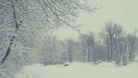Ландшафт зимы с падая снегом Все покрыто с свежим порошком сток-видео