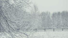 Ландшафт зимы с падая снегом Деталь хворостины дерева Все покрыто с свежим порошком видеоматериал