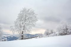 Ландшафт зимы с покрытыми снег деревьями Стоковое Изображение