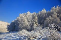 Ландшафт зимы с рекой Katun на горах Altai Стоковое фото RF