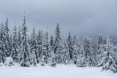 Ландшафт зимы с снегом на деревьях стоковые изображения rf
